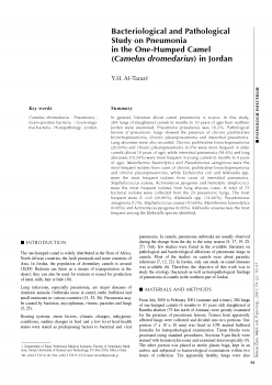 Bacteriological and Pathological Study on Pneumonia in the One-Humped Camel