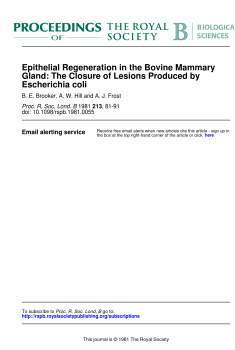 Epithelial Regeneration in the Bovine Mammary Gland The Closure of Lesions Produced by Escherichia coli