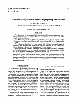 Phosphorus requirements of ewes in pregnancy and lactation
