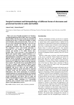 Surgical treatment and histopathology of olecranon and presternal bursitis in cattle and buffalo