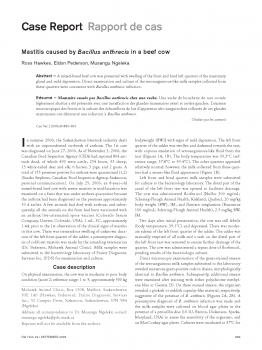 Mastitis caused by Bacillus anthracis in a beef cow