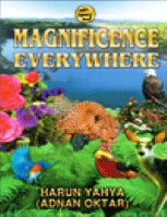 كتاب MAGNIFICENCE EVERYWHERE pdf